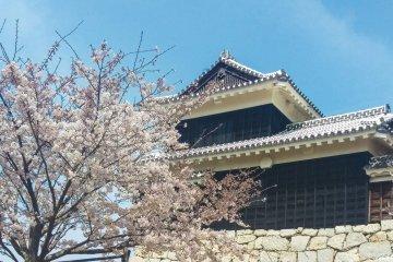 Sakura at Matsuyama Castle