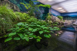 Plant life hanging over the water in one of the exhibits