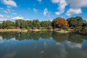 Carp swims in a large pond at Korakuen during the early autumn