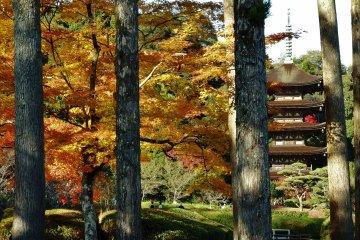 Rurikoji & Toshunji Temples in Fall