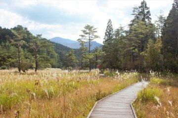 Kurozo Marshlands