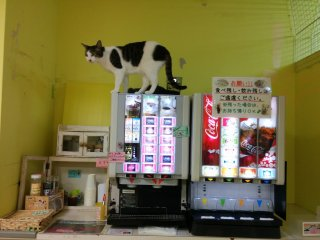 Cat on the drink bar