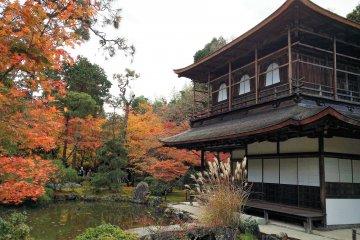 ใบไม้เปลี่ยนสีที่วัดกินคาคุจิ