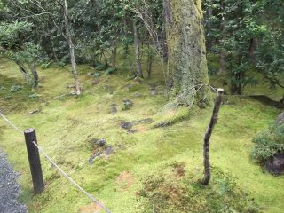 Ancient mosses on the ground and trees in the Garden of Shinyo
