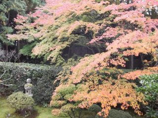 Visit in autumn and some of the trees take on vivid red and orange hues