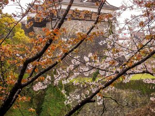 Whatever the weather, the cherry blossoms provide a colorful sight