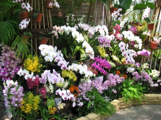 The exhibition of orchids