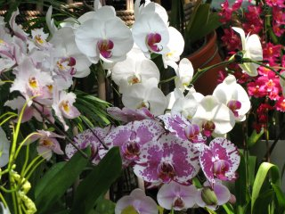 Orchid of different shape and color