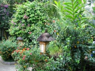 Looks like a tropical garden