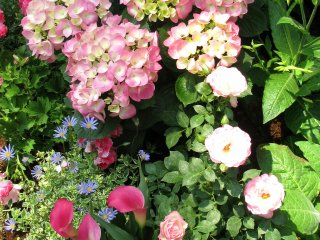 Beautiful mixture of flowers