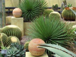 """""""Mexican garden"""""""