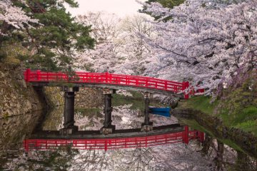 Hirosaki in Cherry Blossom Season