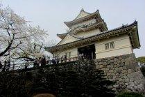 Flores de Cerejeira do Castelo de Odawara
