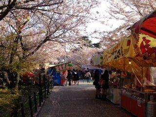 맛있는 간식들을 파는 상점들을 둘러싼 벚꽃나무들.
