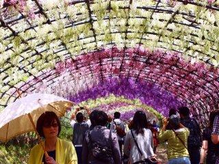 En vous promenant sous le tunnel, vous remarquerez le parfum délicat des fleurs et les ombres tachetées qu'elles projettent partout