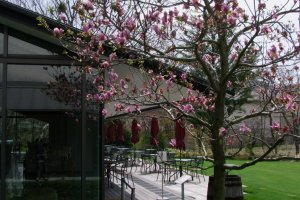 The Lalique Museum garden