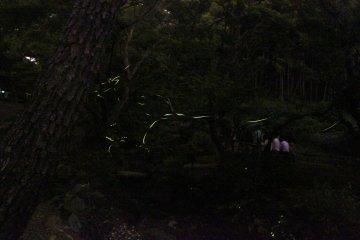 Sankeien Firefly Night