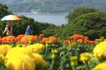 How To Visit Nokonoshima Island in Fukuoka
