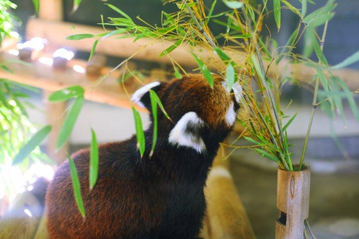 Fukuoka City Zoological Garden