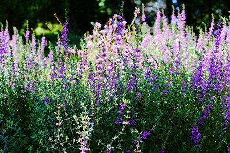 Фукуокский Ботанический Сад