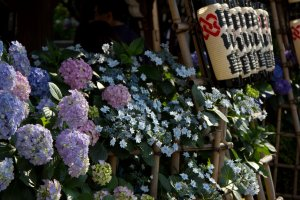 The shrine entrance is decorated with lanterns and surrounded by hydrangea.