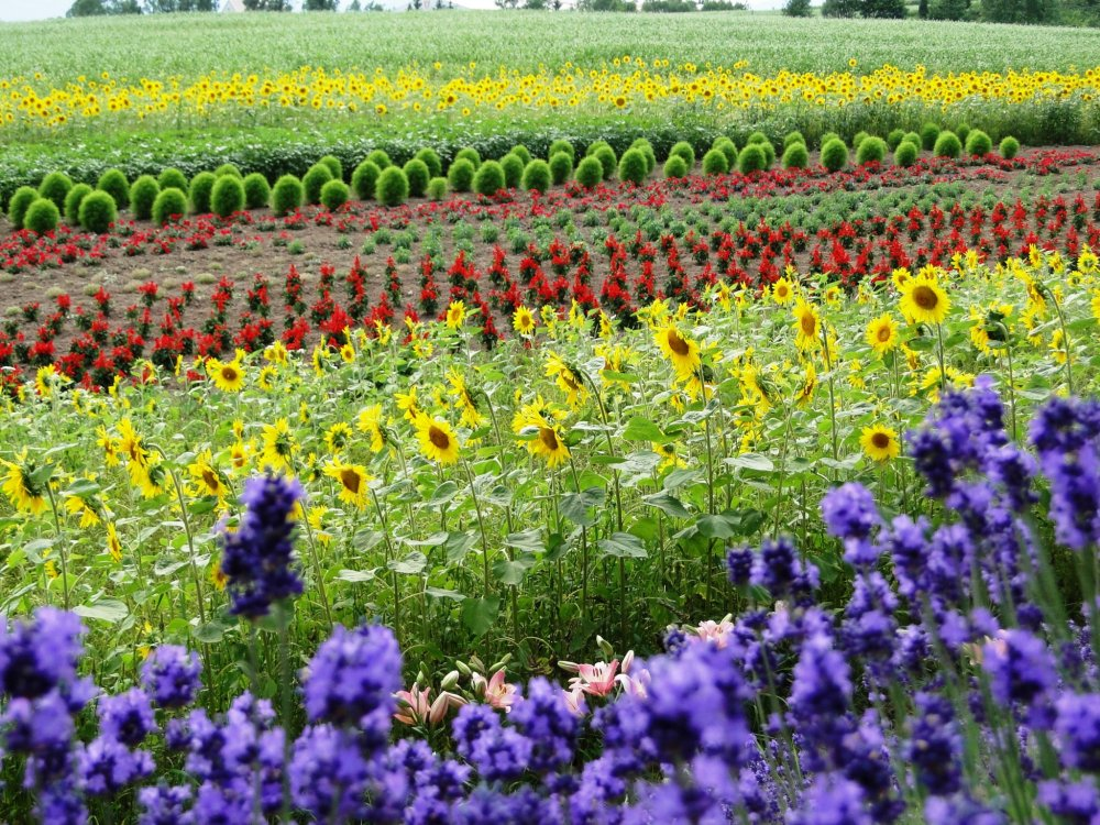 Flowers of all colors at Zerubu Hill