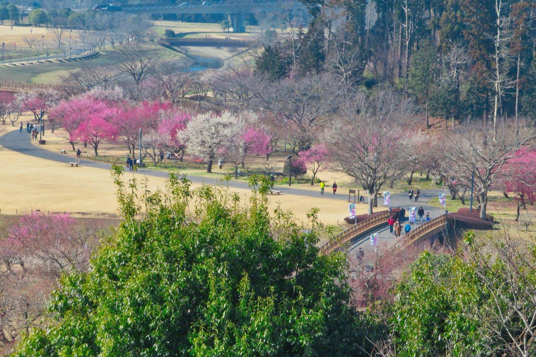 Kairakuen Garden from Kobuntei Porch