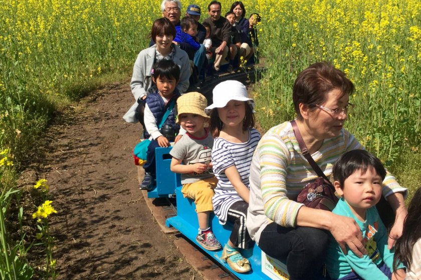 Ride the mini SL train which winds among the rapeseed flowers.