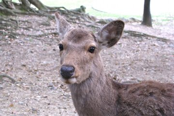 One Day in Nara Park