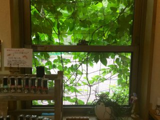 Soothing green vines outside the window. Inside, toxic-free nail polish in all colors.
