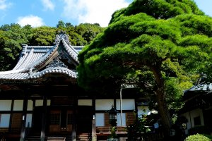 Shuzen-ji Temple is charming and cozy
