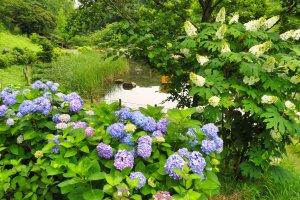 Hodogaya Park pond