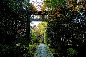 Torii gate for Tosho-gu Shrine