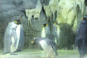البطريق الملك