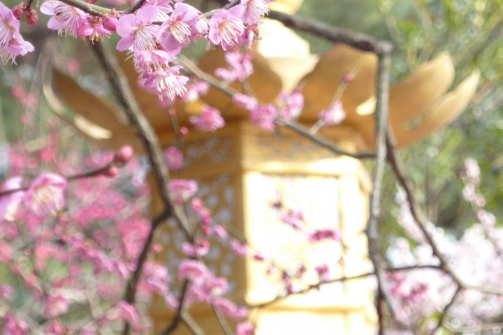 Spring at Kitano Tenman-gu, Kyoto
