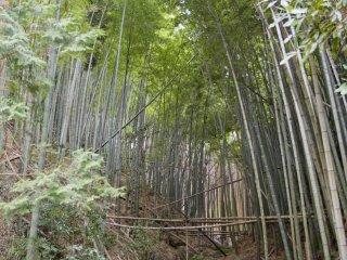 Dengarkan bunyi pohon-pohon bambu yang terkena hembusan angin musim semi di dekat ujung jalan.