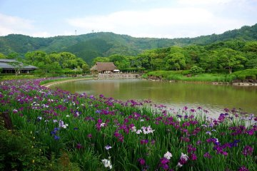 4-Day Self-drive Ohenro, and Shikoku Highlights Tour