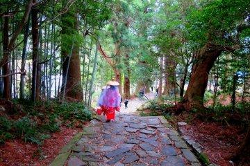Kumano Kodo Ise-ji Walking Tour