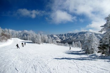 JapanTravel Local: Shiga Kogen Snow Trip - January 25-27, 2019