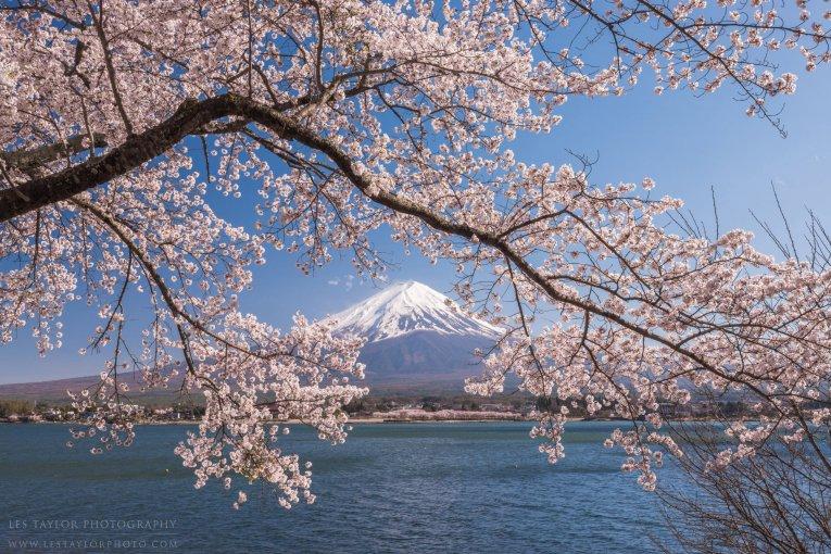Mount Fuji Photography Tour, Apr 15 - 19, 2019