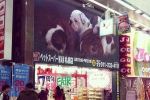 ร้านค้าตลอดข้างทาง ร้านนี้ Display น้องหมาน้อยน่ารักมาก