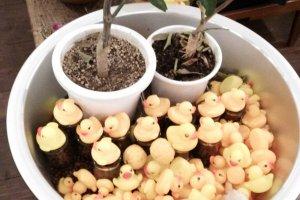 Ducks. Ducks everywhere!