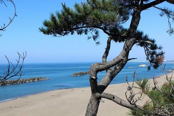 福井市浜住町から三国の九頭竜川河口まで弓なりに延びる三里浜
