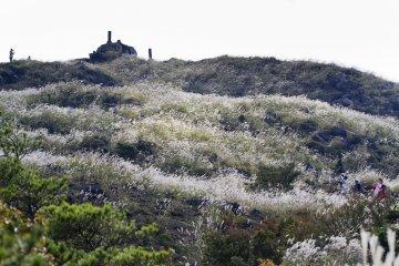 Rt. 1,울퉁불퉁한 오솔길에서 참억새 수풀로 덮혀있는 이오산의 사면을 올려다 본다