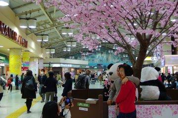 <p>มีต้นซากุระพลาสติกประดับให้คนถ่ายรูปในสถานี Ueno ด้วย 55</p>