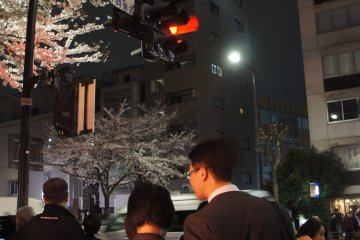 A couple on way back from a hard day's work find time to come to Kudanshita and enjoy the blossoms with the night-time light-up.