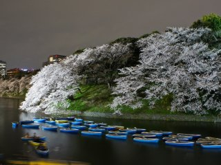 Cherry blossoms at its peak around Chidorigafuchi in Tokyo. If you have time and company, take a rowboat and enjoy the flowers from the water.