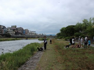 The bank near the Gojo and Shijo areas of Kyoto. You can see many locals enjoying a stroll along the river bank.
