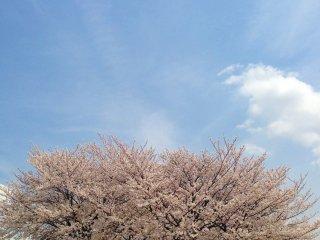 Quem iria adivinhar que esta foto foi tirada em Tóquio?