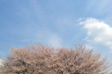<p>谁又能想象这样的田园风光是在东京拍摄的?</p>